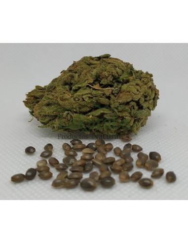 Semilla Spice Earthy